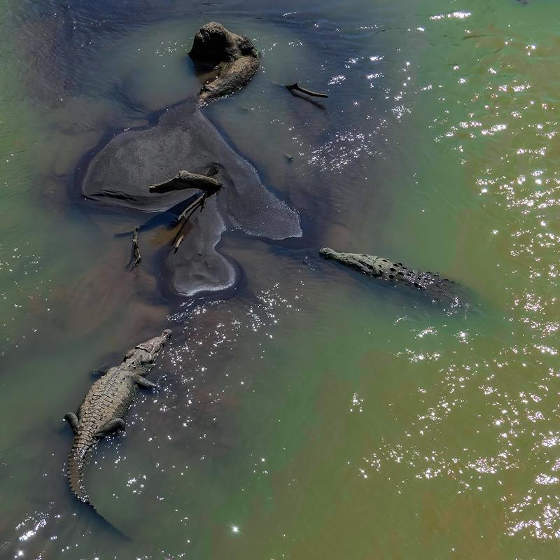 L'ilôt aux crocodiles du Rio Tarcoles... 50541100771_c68c2f339d_c