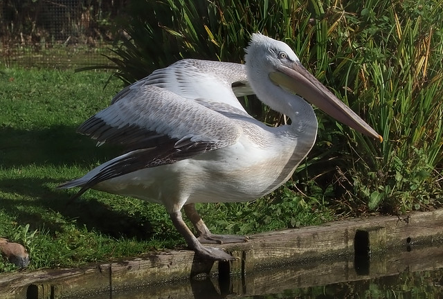Arundel Wildfowl and Wetlands Trust