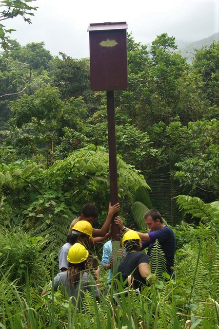 A bat box is installed in the El Yunque National Forest of Puerto Rico