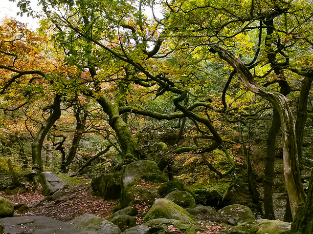 Padley Gorge, Derbyshire Dales District, England