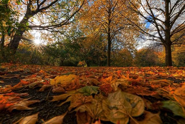 Autumn > in explore