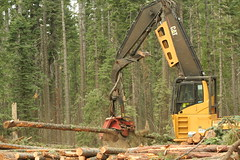 Harvester delimbing a felled tree_SNAMP project_Sept 2011