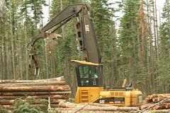 Feller buncher gathering felled trees_SNAMP project_Sept 2011
