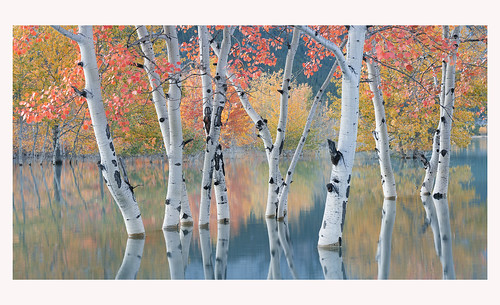 Autumn in the Lake