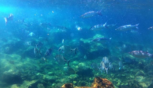 Azoren - Pico Criação Velha Natural Pool.18
