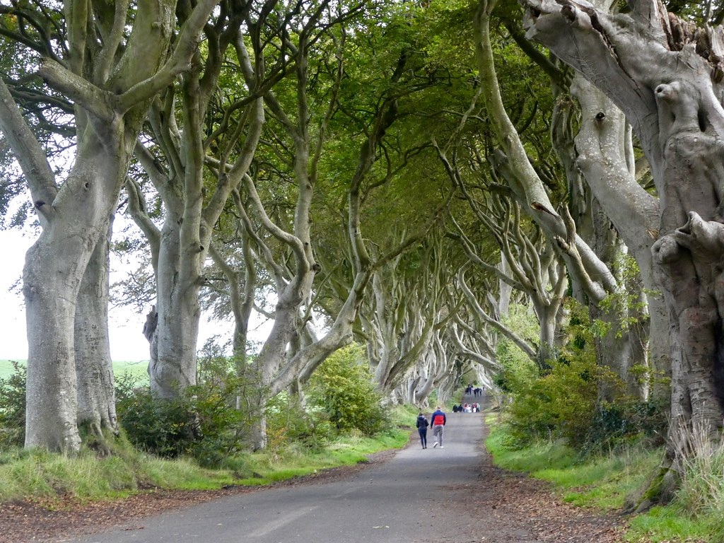 The Dark Hedges, Kings Road Game of Thrones