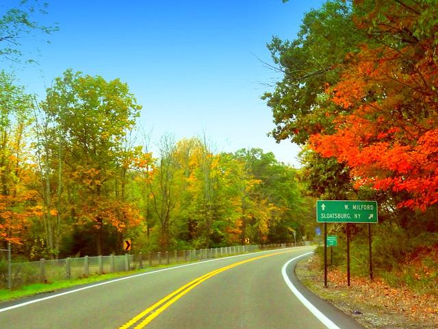 Road Turn at Fall