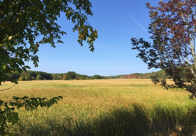 The Grassland of Pleasant Cove