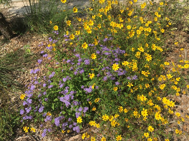 Gabriel's Fall Garden