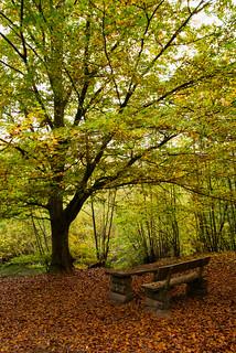 Herbstsimmung   MABA6687