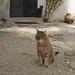 Gatti in prospettiva 1