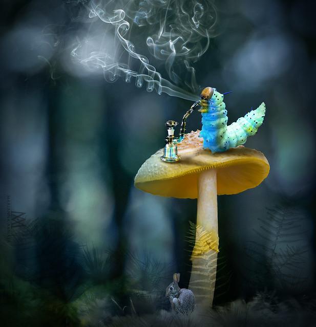 Alice's Blue Caterpillar