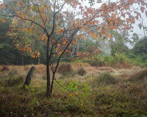 Mist over fen