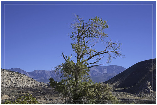 tree whiterocks trail snowcanyon statepark utah nature pinevalleymountain sky nikon d750