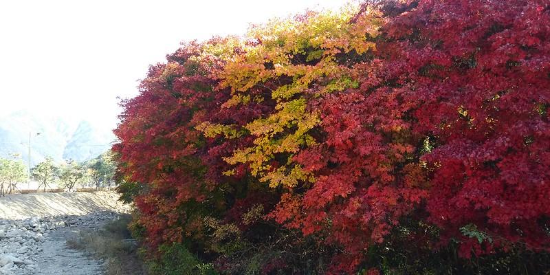 가을 | 동네한바퀴