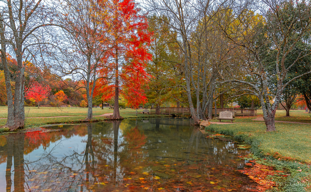 Fall along Jolly Spring