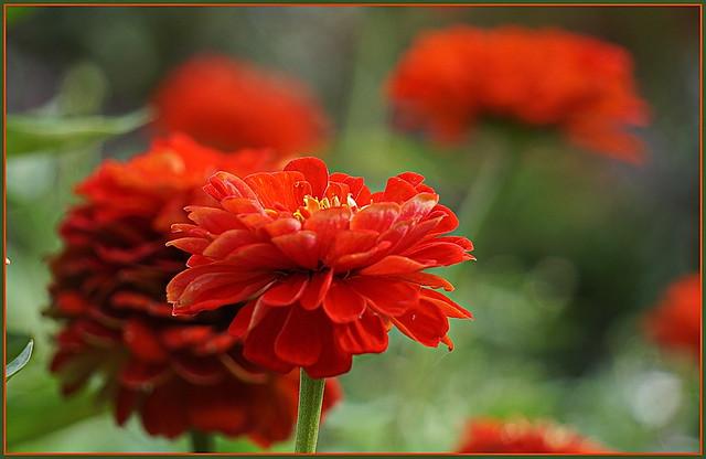🍄🌿🍃🌺🌳💖🌳🌺🌿🍃🍄 Ein kleiner Blumengruß zum Morgen ...