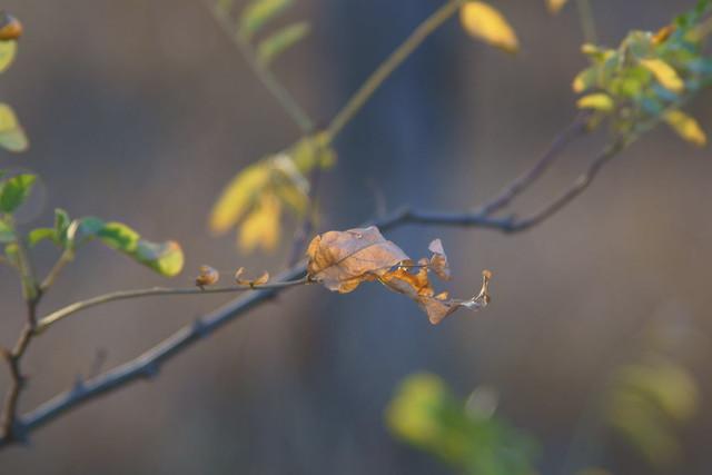 Последние листья / Last leaves (1)