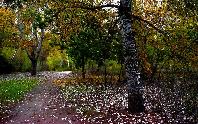 Paleta de otoño...