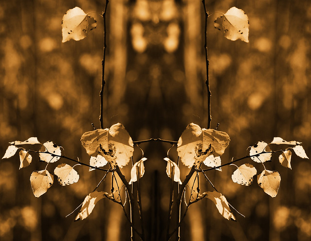 mirrored leaves