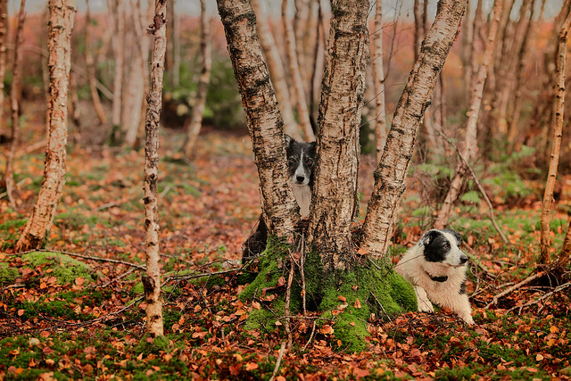 44/52 The Lookouts
