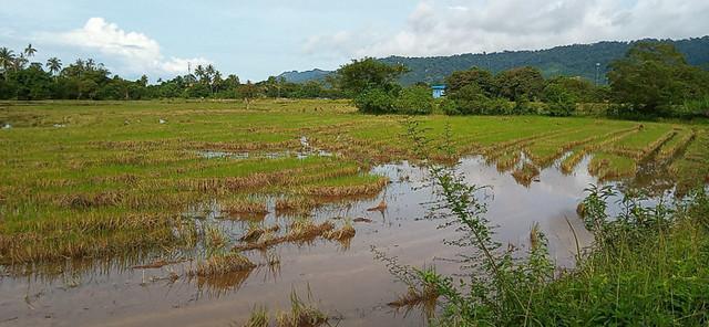 Padang Matsirat Sawah