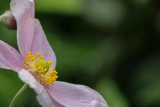 Dernière fleur du jardin