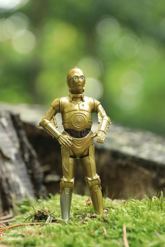 C3PO im Wald