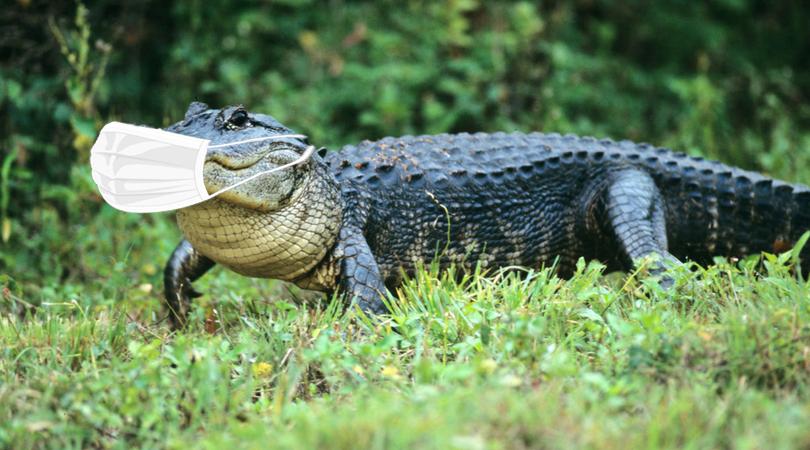 masked gator