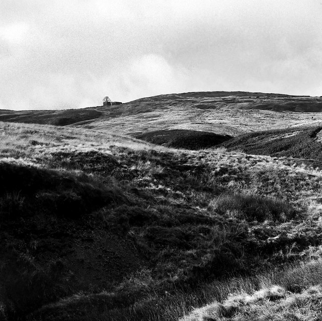 Wuthering Heights Perhaps?
