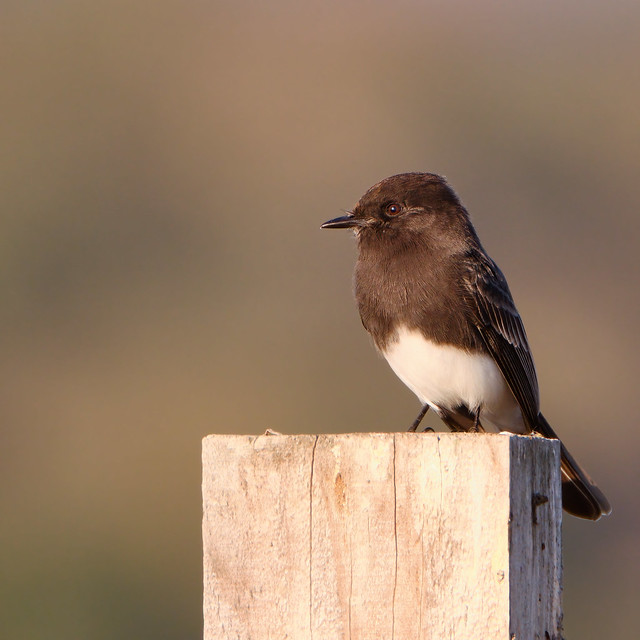 Perched on fence post
