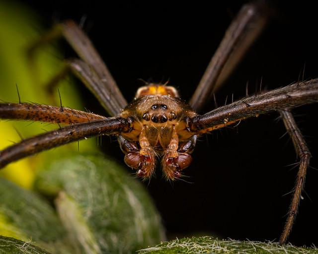 Spider Portrait 2