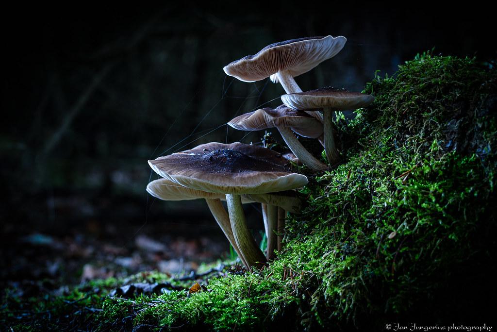 spooky mushrooms