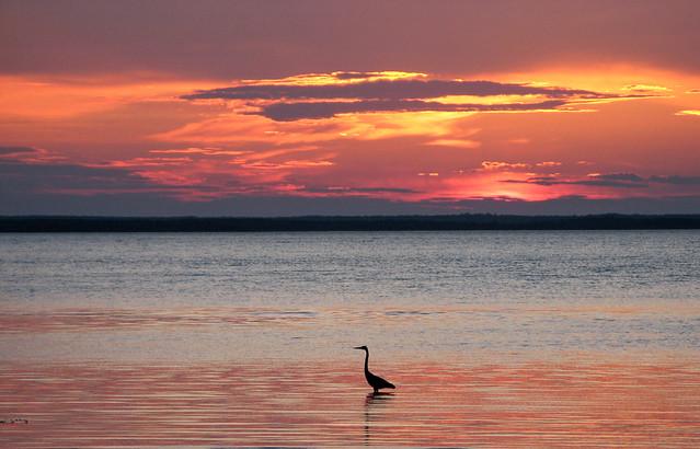 Canadian Sunset- Bird_7699