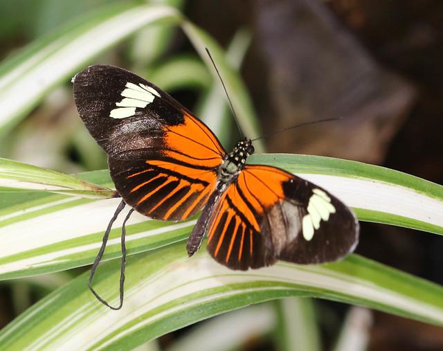 Butterfly World 29102020 (22)