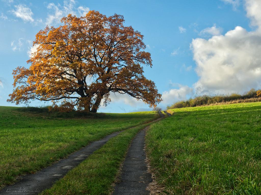 The Seasons: Fall