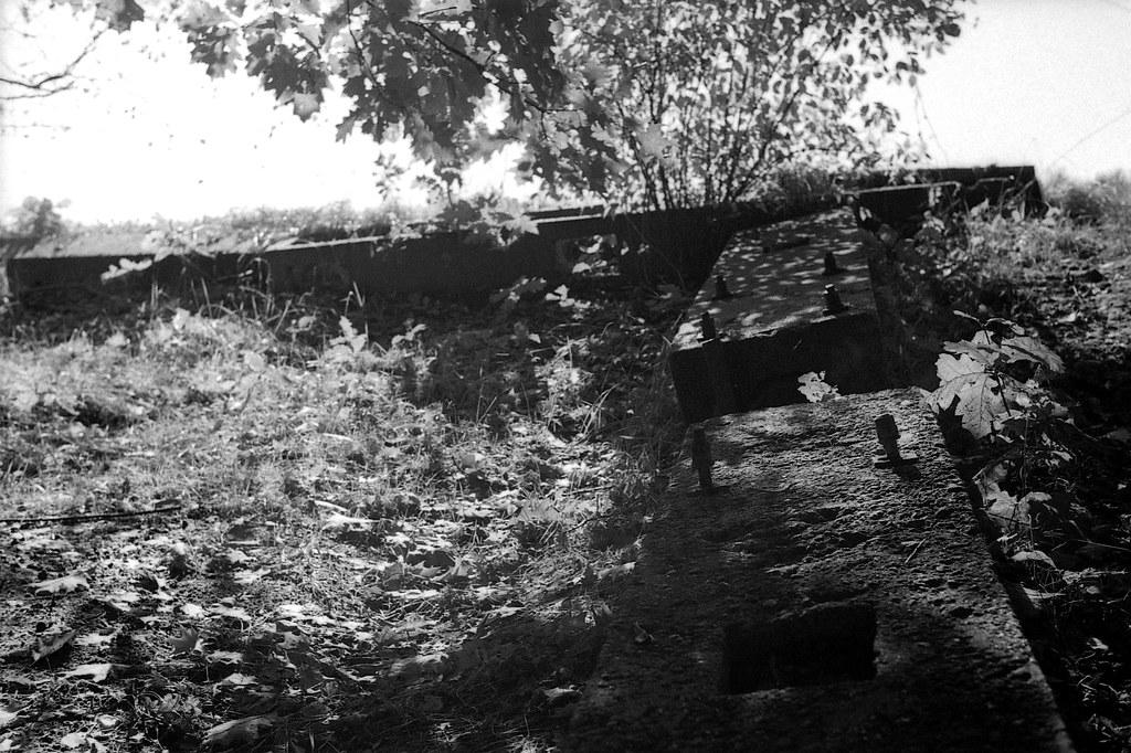 W cieniu / In the shadow