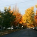 Winspear Ave in Fall