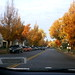 Winspear Ave in Fall - The Next Block