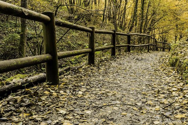 Autumn in Levico 2