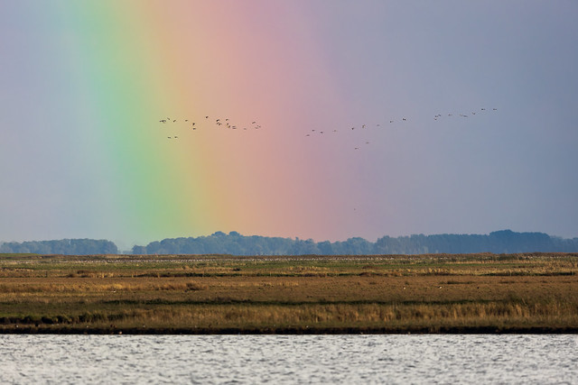 Cranes under the rainbow, West-Pomerania, Germany
