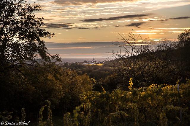 Herbstabend im Weinberg