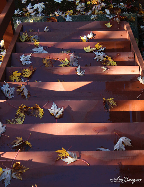 Abstract Stairs&Leaves-Fall_6467
