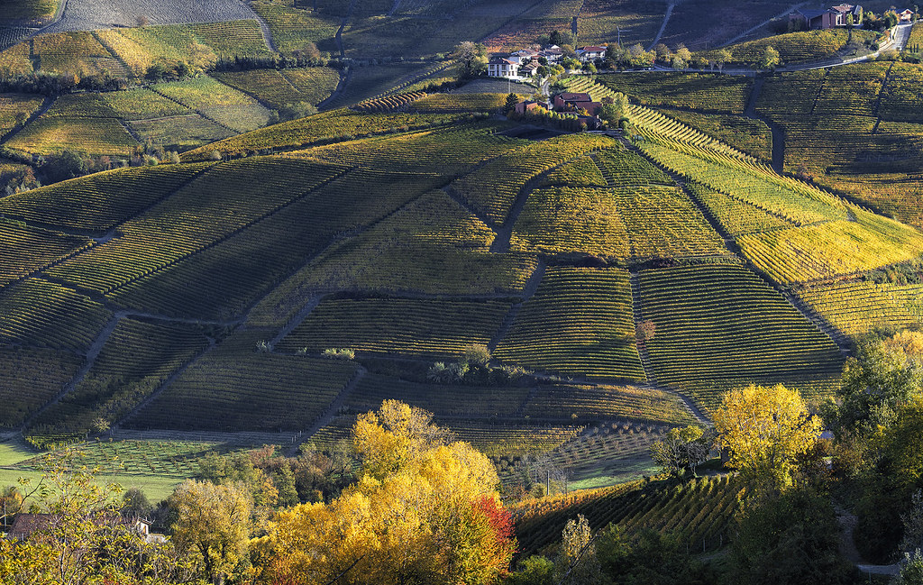THE HILL of VINEYARDS