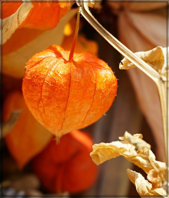 Looking close...on Friday: orange