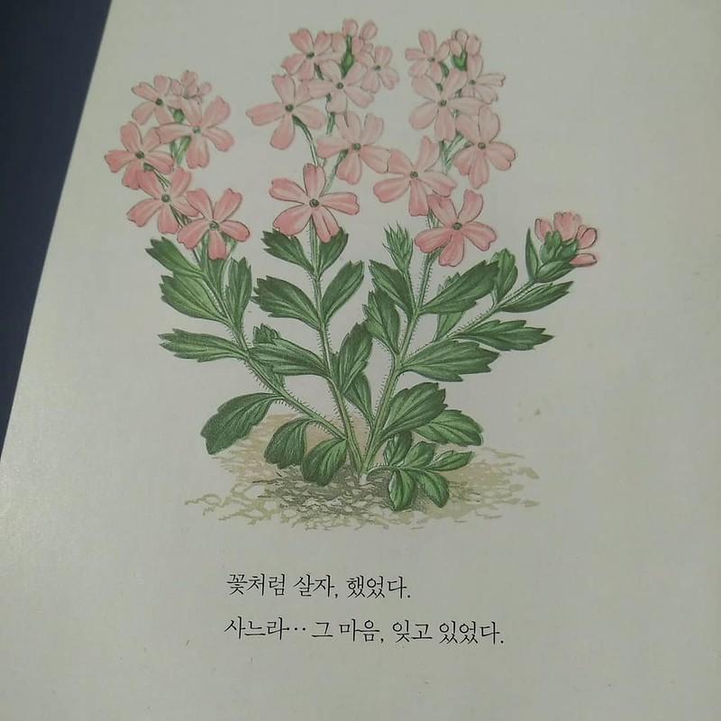 독서노트 | 꽃처럼 살자