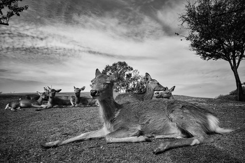 Deers rest.