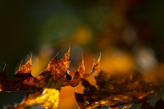 embracing autumn colours