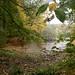 Stadwald im Herbstregen-bw_20201028_0477.jpg