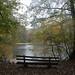 Stadwald im Herbstregen-bw_20201028_0488.jpg